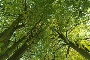 libera università- bosco